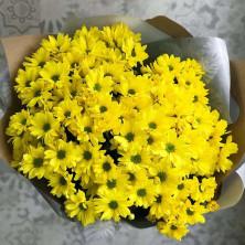 15 хризантем желтых