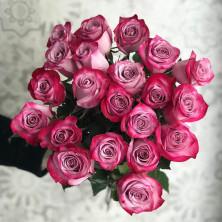 21 роза Deep Purple