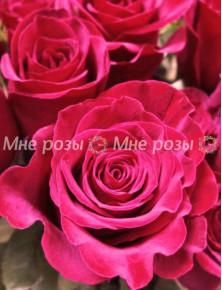 Роза Фридом 80см